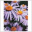 cross stitch pattern Mini Purple Daisies