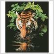 cross stitch pattern Tiger Reflection