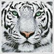 cross stitch pattern White Tiger Close Up
