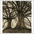 cross stitch pattern Branching Out - Sepia (Crop)
