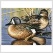 cross stitch pattern Blue Winged Teal Ducks