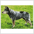 cross stitch pattern Mini Blue Heeler