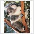 cross stitch pattern Koala Photo