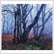 cross stitch pattern Misty Forest (Crop)