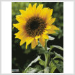 cross stitch pattern Sunflower (Large)