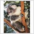 cross stitch pattern Mini Koala Photo