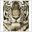 cross stitch pattern Tiger Portrait (Sepia)