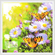 cross stitch pattern Posies and Butterflies